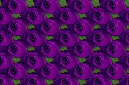 closely: Background of violet roses with leaf lying closely beside