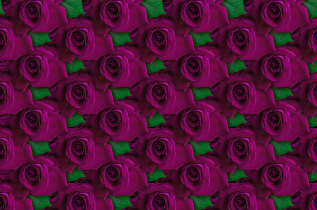 closely: Background of purple roses with leaf lying closely beside