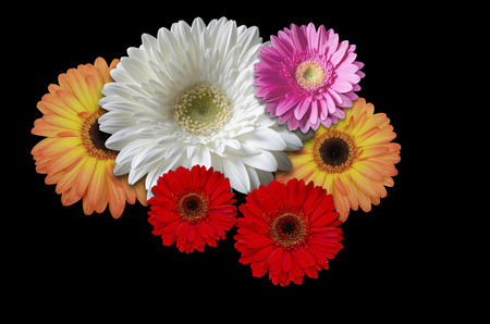 multicolored: Multicolored flowers daisies on a black background Stock Photo