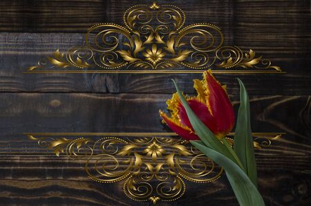 red tulip: Red tulip with a yellow edging on dark wooden boards Stock Photo