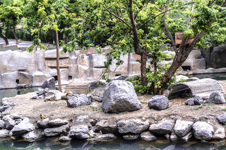 City park with pond and small island  with tree where�live monkeys