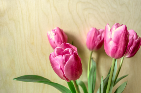purples: Bouquet of pink tulips on a background of light plywood