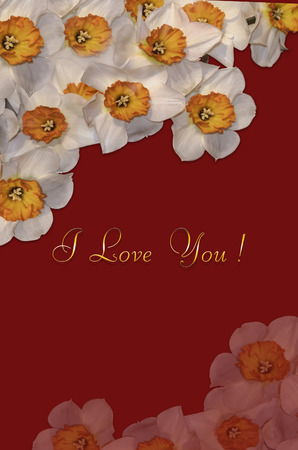 Greeting card with white daffodils in the corners and golden greeting I Love You on claret background Stok Fotoğraf