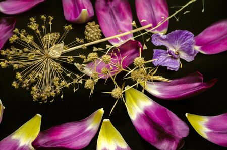 Black background with thorns,decorative Allium,dry branch of a shepherd's bag,fading orchid, coniferous cones and sparkling purple Tulip petals