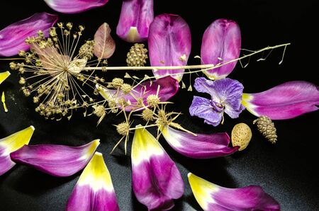 Dry decorative Allium,a faded Orchid,a dry sprig of a shepherd's bag with sparkling purple Tulip petals on a black background.