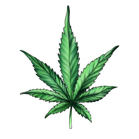 Green hemp leaf isolated on a white background. Watercolor illustration