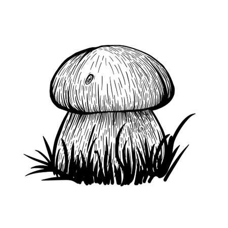 Boletus mushroom isolated on a white background. An edible sponge Mushroom with a stem and cap. Delicious autumn forest mushrooms. Vegan food. Hand drawn vector illustration