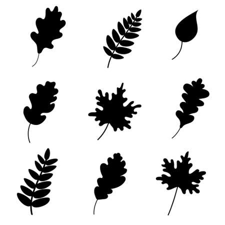 Silhouette of leaves on a white background