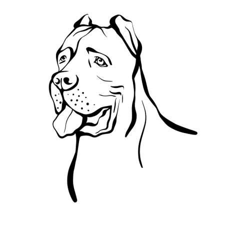 Cane Corso sketch. Portrait of a dog of the Cane Corso breed. Hand drawn vector illustration Vettoriali