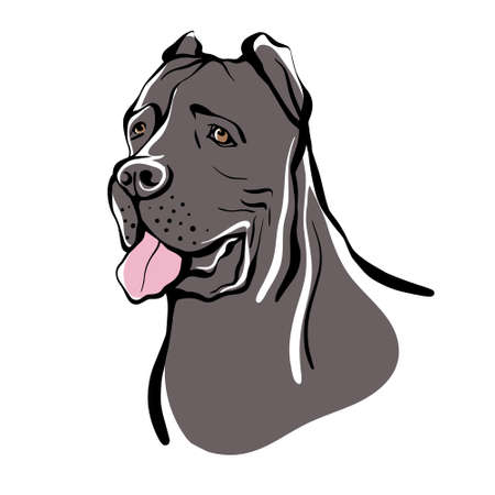 Cane Corso sketch. Portrait of a dog of the Cane Corso breed. Vector illustration