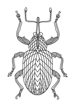 Beetle weevil coloring book. Walnut beetle linear vector illustration. Anti-stress coloring book for adults and children. A hand-drawn coloring book for doodles