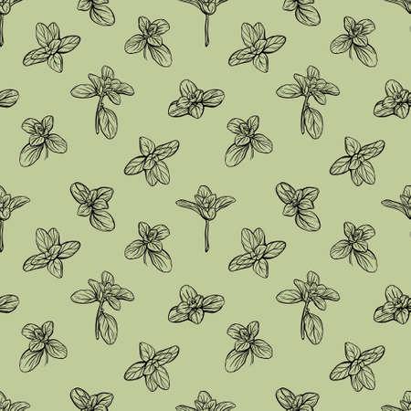 Basil Seamless Pattern. Italian herbs. Marjoram pattern. Hand-drawn illustration