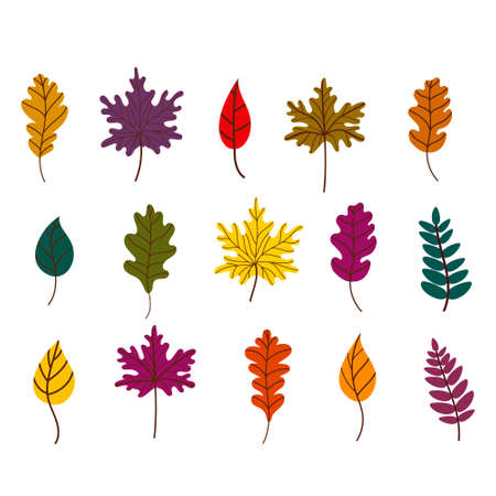 Autumn fallen leaves set. Maple, oak, and birch leaves isolated on a white background. Vector illustration in a flat style. Elements for autumn design