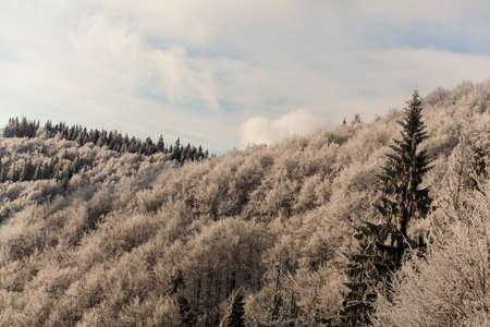 Snow-covered trees against the blue sky Reklamní fotografie