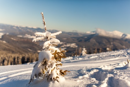 Snow-covered tree stands in the mountains