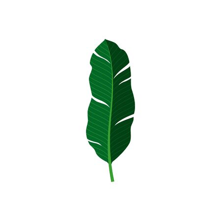 Tropical palm leaf. Vector isolated illustration with exotic leaf on white background. Can be used for printing, banners, postcard, websites, clothing.