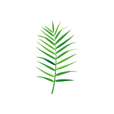 Exotic palm leaf. Vector isolated illustration with tropical leaf on white background. Can be used for printing, banners, postcard, websites, clothing. Çizim
