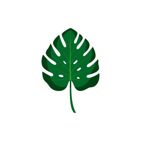 Leaf of monstera. Vector isolated illustration with tropical leaf on white background. Can be used for printing, banners, postcard, websites, clothing.