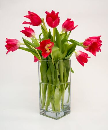 green day: Red tulips in a vase Stock Photo