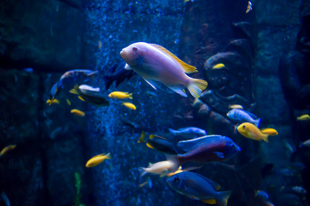 red coral colony: Exotic fish in an aquarium Stock Photo