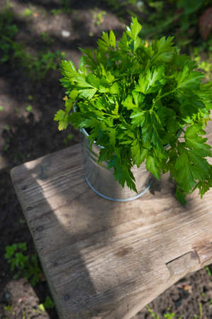 Parsley in bucket