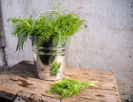 Dill in bucket Stock Photo