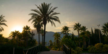 Park with palm trees on a background of mountains