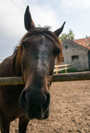 Portrait of a horse Stock Photo
