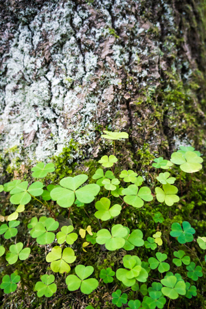green sprouts germination growth into forest Stock Photo