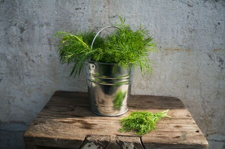 Dill in bucket Stock Photo - 46594104