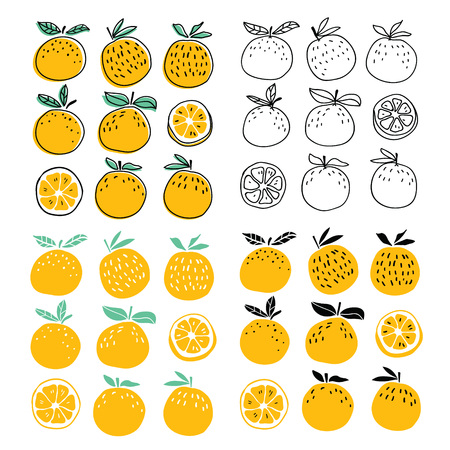 Set of stylish oranges fruits vector illustration. Summer design