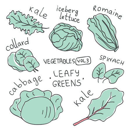 Set with hand drawn colorful doodle vegetables. Vegetables flat icons set of leafy greens : kale, iceberg lettuce, romaine, spinach, cabbage, collard,