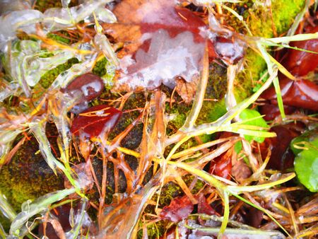 Brightly colored autumn leaves and grass with dusting of frost. Reklamní fotografie