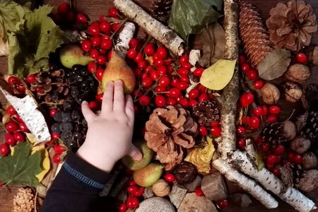 Autumn background with rose hip, cones, birch, nuts and kids hand.