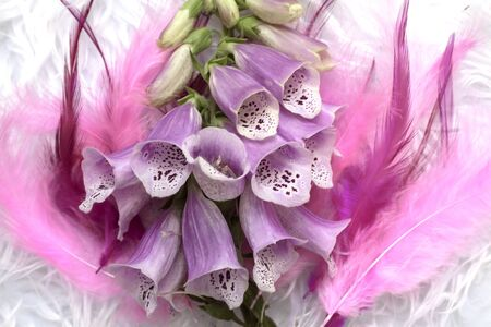 Closeup foxglove, lady glove violet lilac plant on pink and lilac feather background perfect for wedding card, invitation. Soft colors.