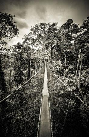 rope bridge: Canopy Walkway Stock Photo
