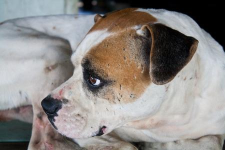 Dog with Sad Eyes Stock Photo - 30526028