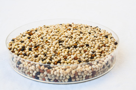 embryonic: Organic Seed Mixes for Birds Stock Photo Stock Photo