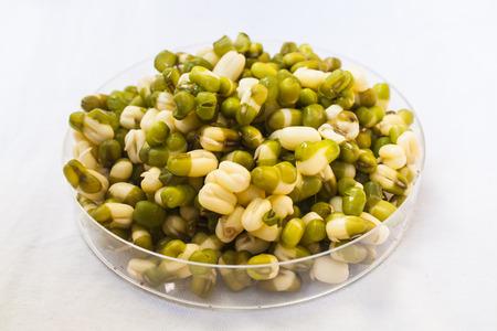mung bean: Organic Green Mung Bean Stock Photo