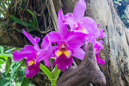 orchidaceae: Beautiful Orchid Flower (Orchidaceae) in a Park Stock Photo