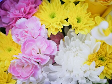 beautiful exclusion integrity color flowers Stock Photo