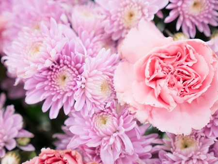 beautiful exclusion integrity elegance pink pastel color flowers Stock Photo