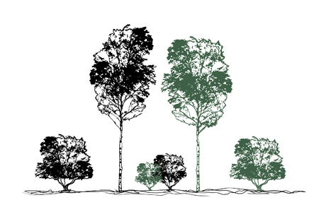 Trees, forest, grove, bushes, birch trees isolated on white background - vector illustration staffing. Silhouette, stamp for decoration