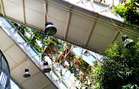 Garden plants in the greenhouse. Conservatory (orangery) building architecture of Minsk Belarus. Dynamic solar sunny showing the power of nature. 版權商用圖片