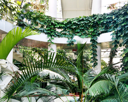 Interior of greenhouse building in Minsk Belarus - a sunny seasonal summer photo for presentations. Tropical exotic plants (palm and ivy) grow inside Orangery, power of nature.