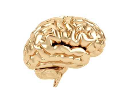 Golden brain on a white background. photo