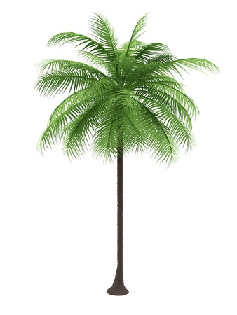 Green palm on a white background. 3d image.