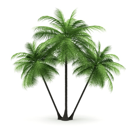 Green palms on a white background. 3d image.  Stock Photo