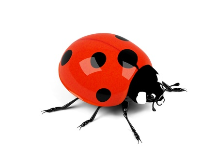 Ladybird on a white background