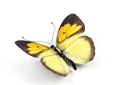 Butterfly - 3d render illustration on white background. illustration